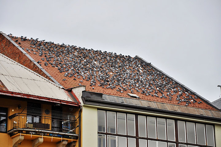 A2B Pest Control are able to install spikes to deter birds from roofs in Bolton.