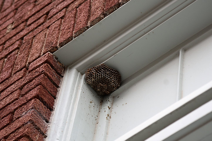 We provide a wasp nest removal service for domestic and commercial properties in Bolton.